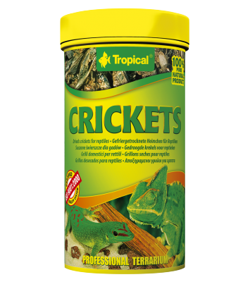Tropical Crickets - 10g/100ml